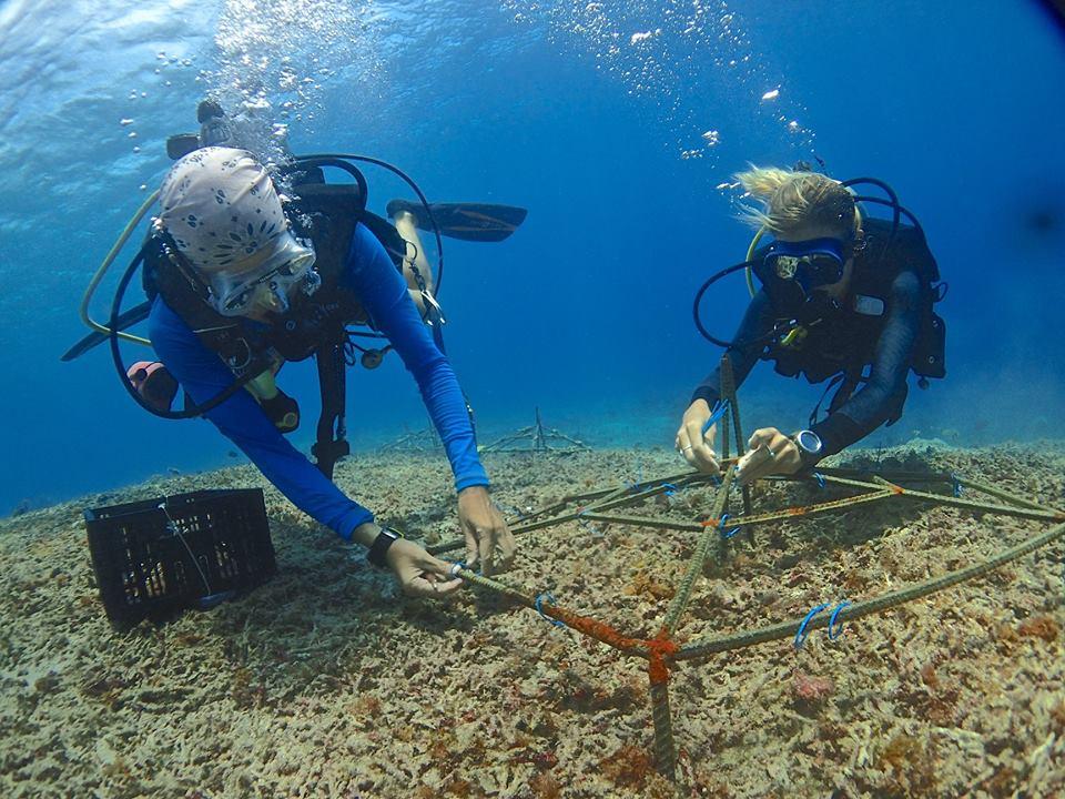 coral reef transplantation