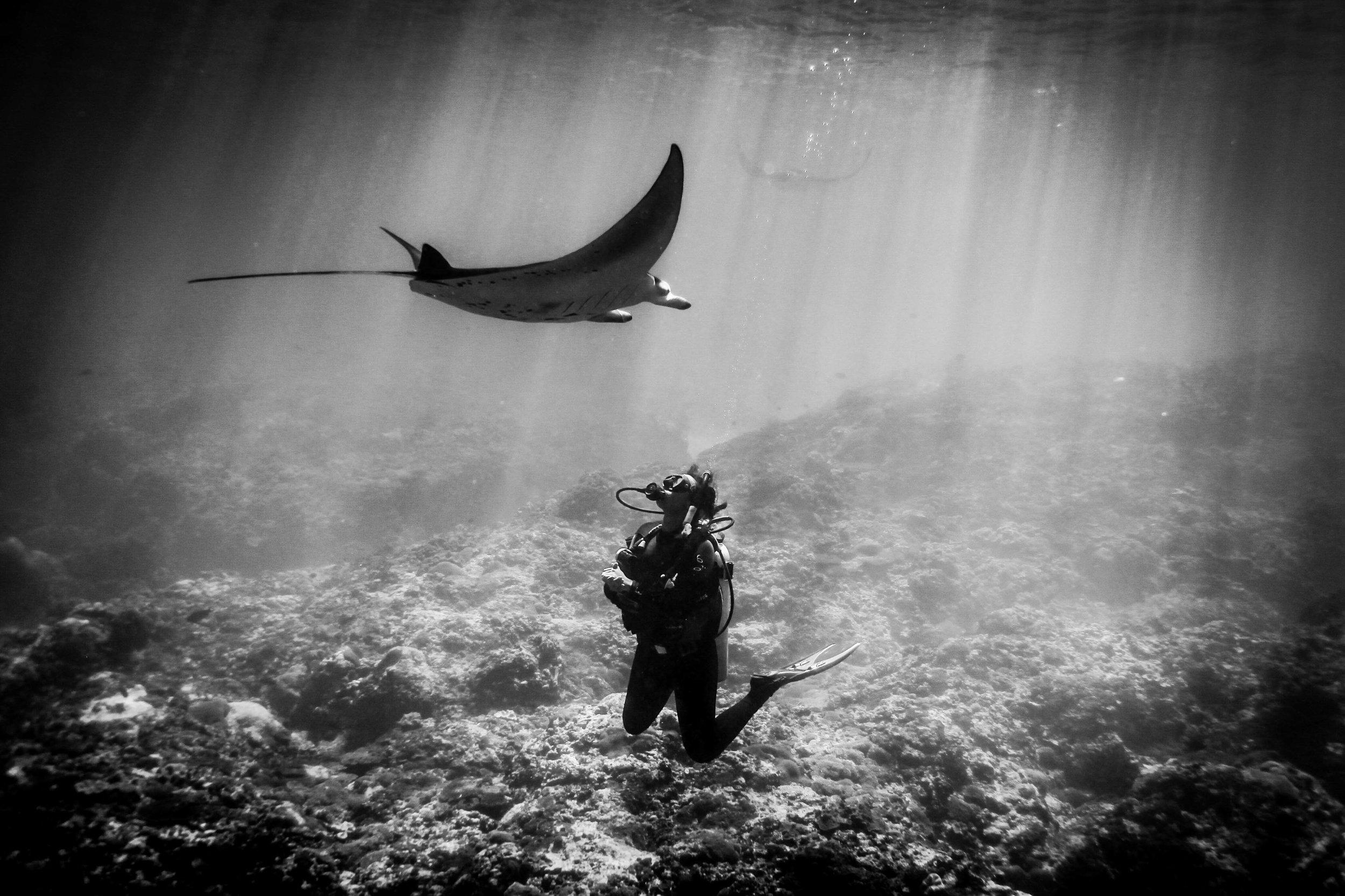 Manta Ray and PADI Scuba Diver