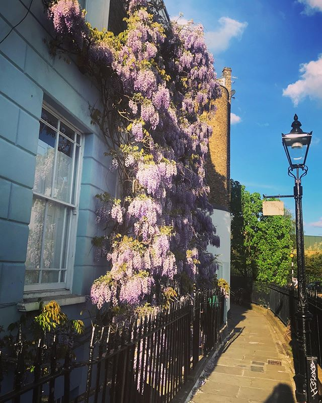Lovely scented London . . . . . . #nearlysummer #scent #memories #london #canal #breathe #joy #spring  #bikerides #moment #love #chill #worthwhileme #wisteria