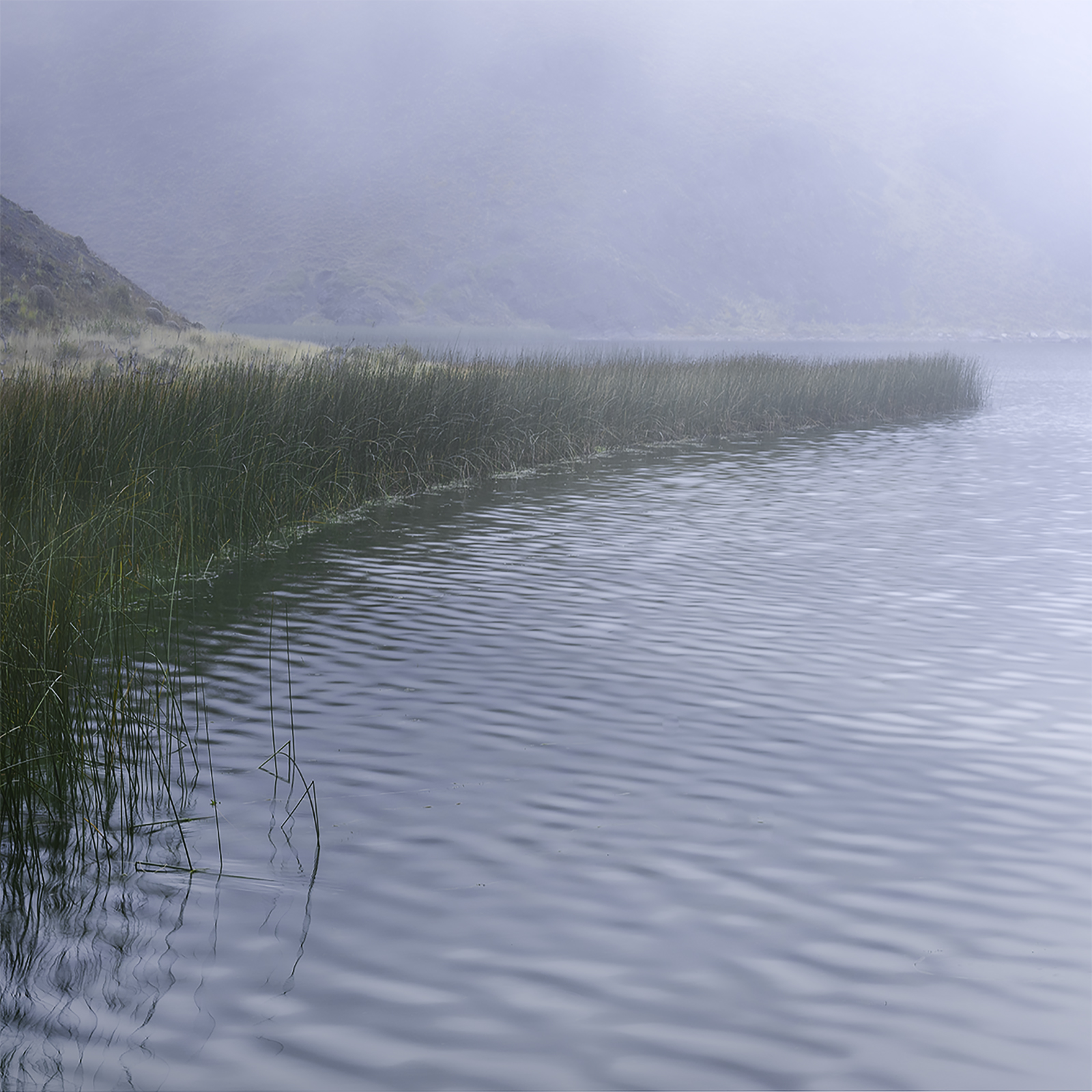 Reeds, study#2 - Torres del Paine, Patagonia
