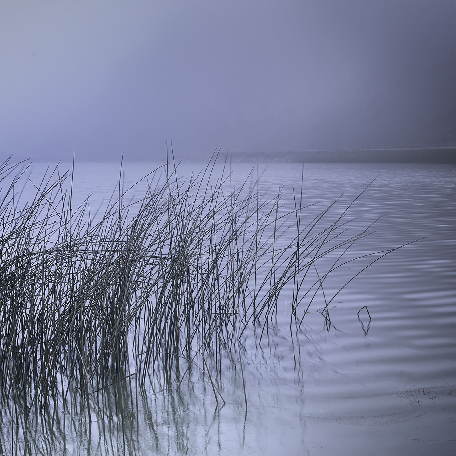 Reeds, study#3 - Torres del Paine, Patagonia
