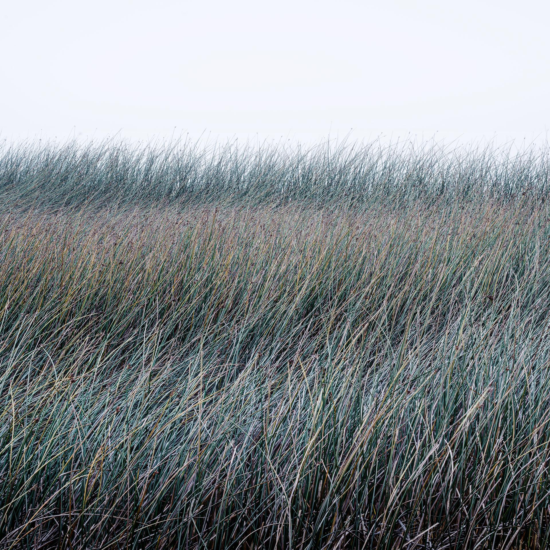 Reeds, study#1 - Torres del Paine, Patagonia