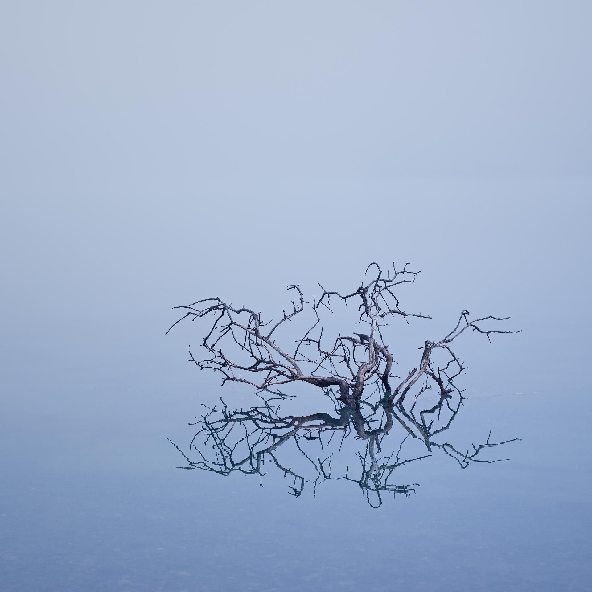 Tree study#3- Lake Pehoe, Torres del Paine, Patagonia