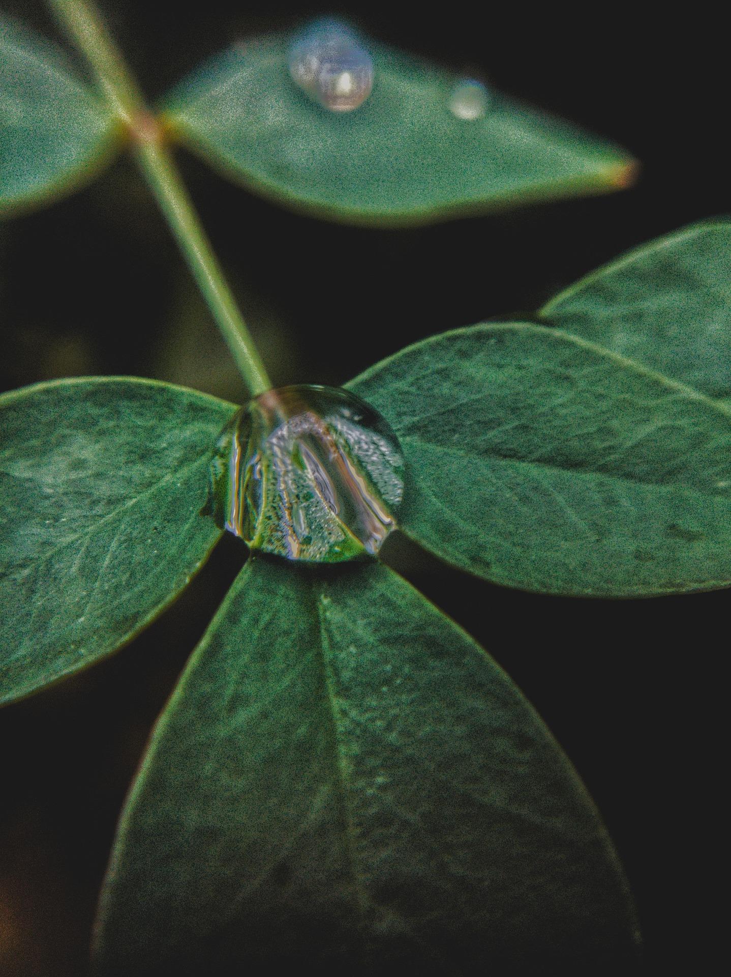 leaf-droplet.jpg