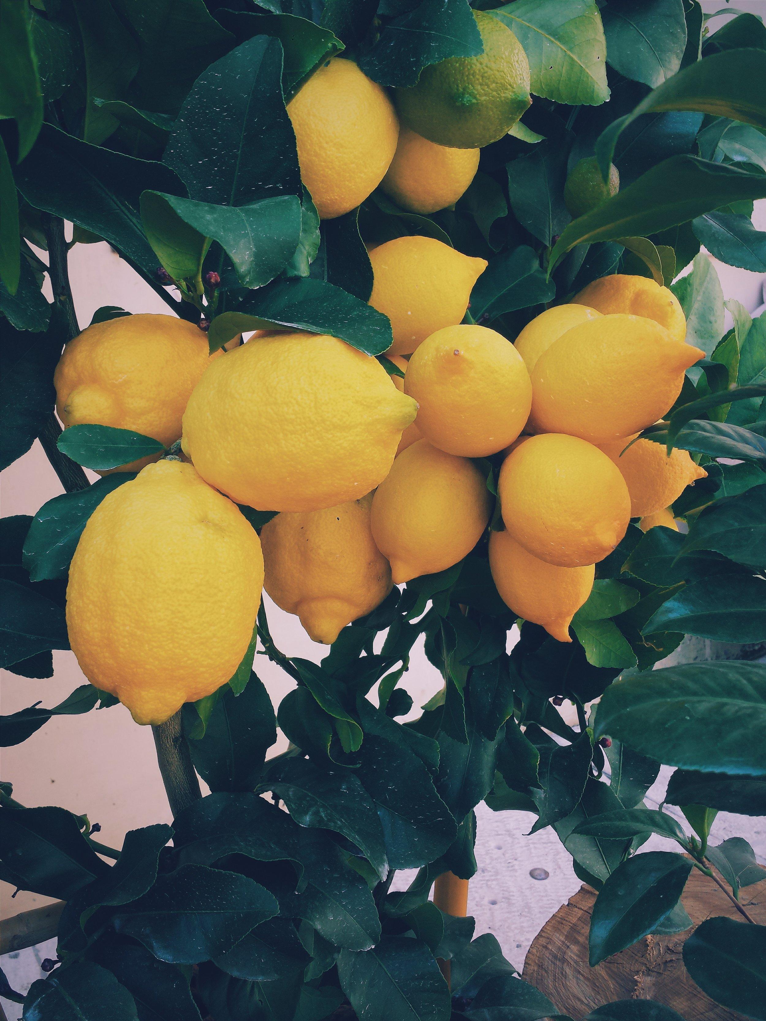 Lemon essential oil is produced by cold pressing lemon peel