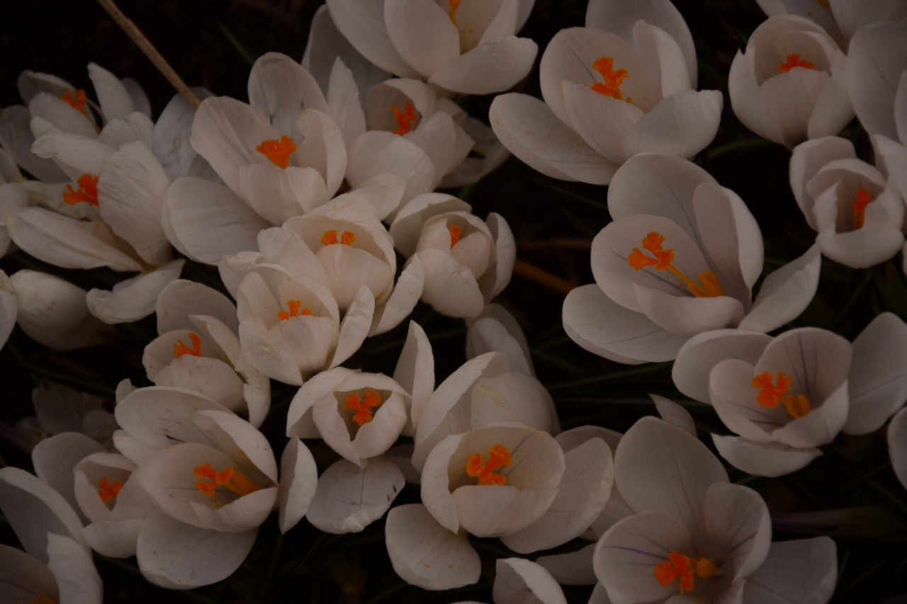 Flower Power Estocolmo -