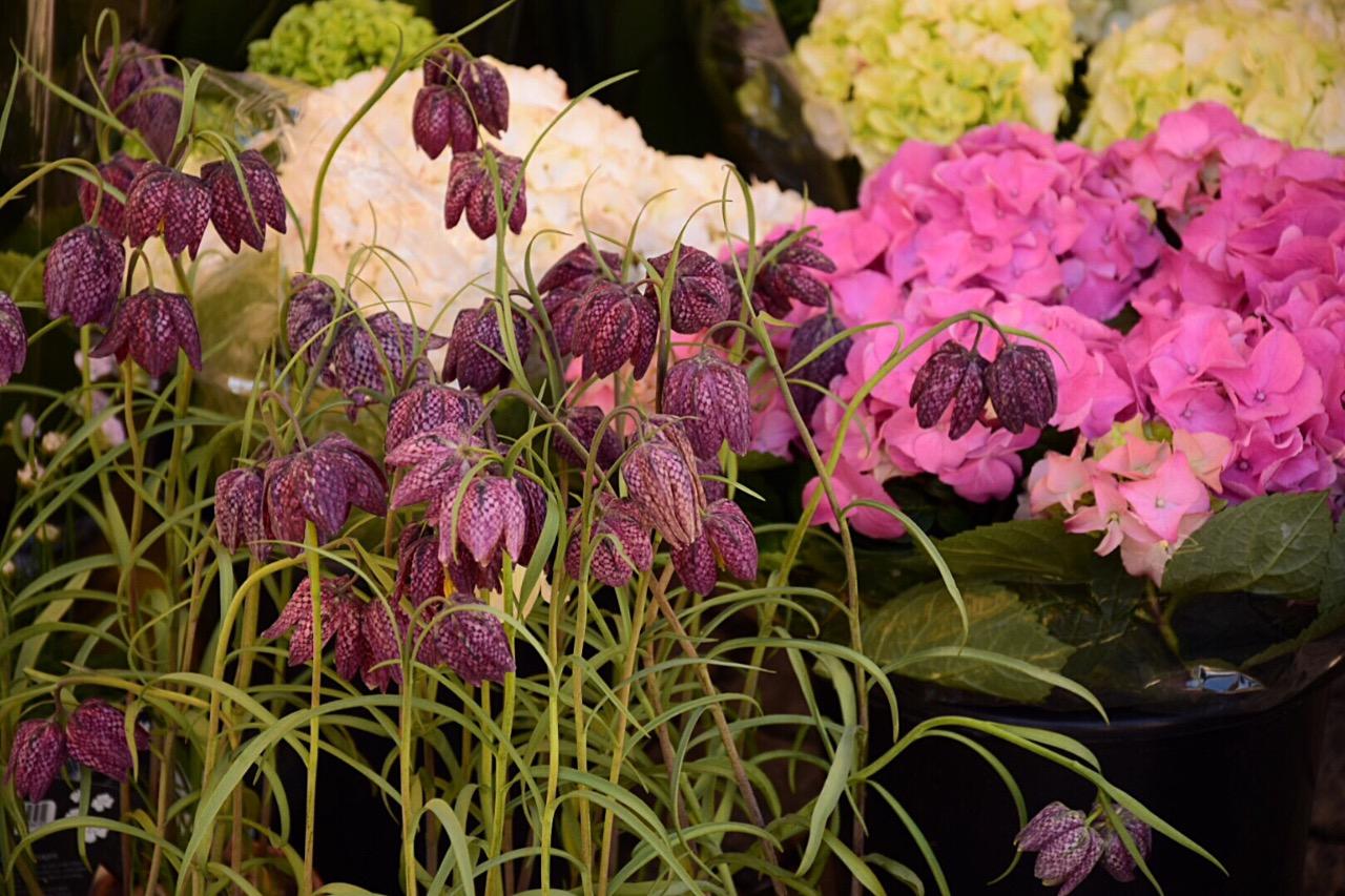 Estocolmo 3 flowers Viajar Inspira