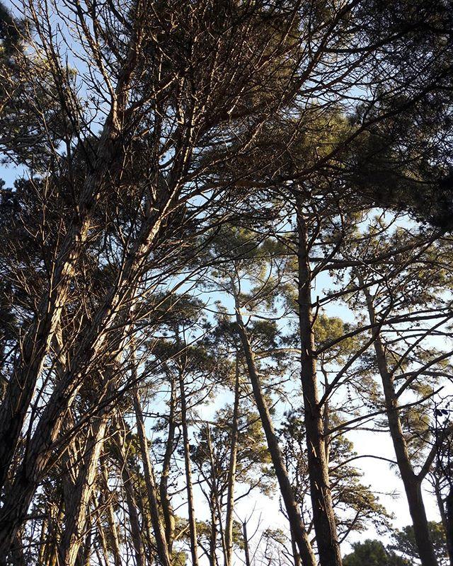 Nuestro bosque por unos dias...lo que mas me gusta de Cariló es el hermoso contraste entre el mar, los medanos de arena y el.bosque de altisimos árboles que hacen que te sientas como parte de un cuento; solo faltan los gnomos y las hadas 😊 . El contacto con la naturaleza; el silencio, el.sonido de los pájaros y el mar son hoy lo que necesitaba para descansar realmente...vivo todos los dias rodeada de naturaleza pero sumarle el mar frente a mi vista fue la mejor decisión! . .#carilo #bosque #wood #nature #blogdeviajes #travelblog #miradadeviajarinspira #relax #nature #simplelife