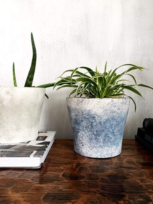 Baby spider plant - picture curtesy of @JTcollings