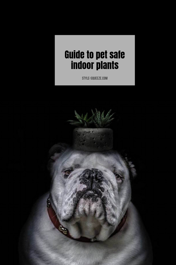 Your guide to pet safe indoor plants