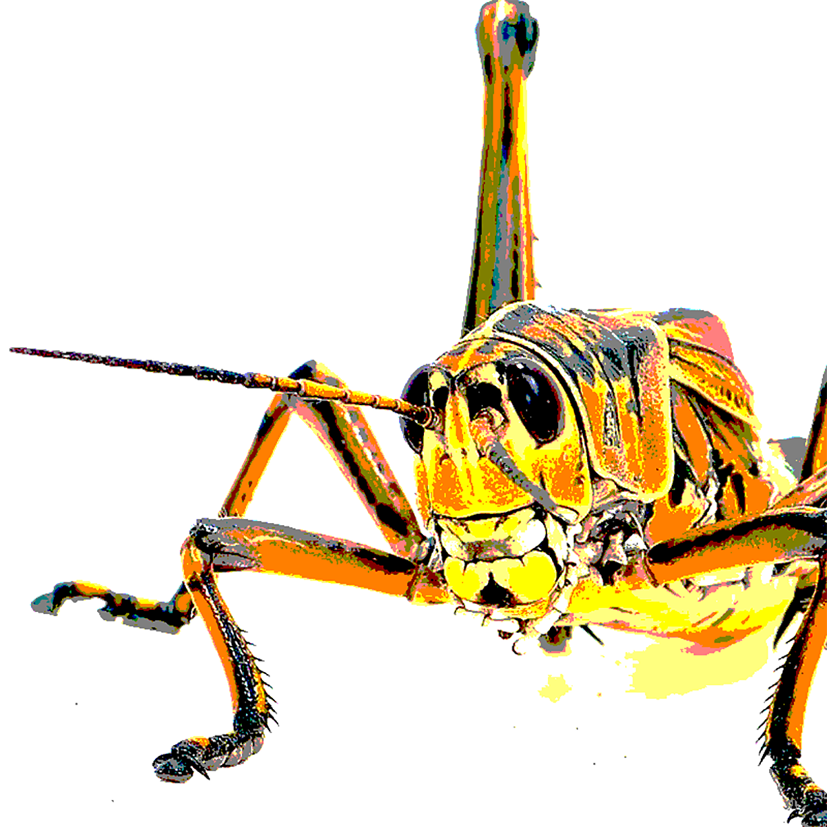 grasshopper3.png