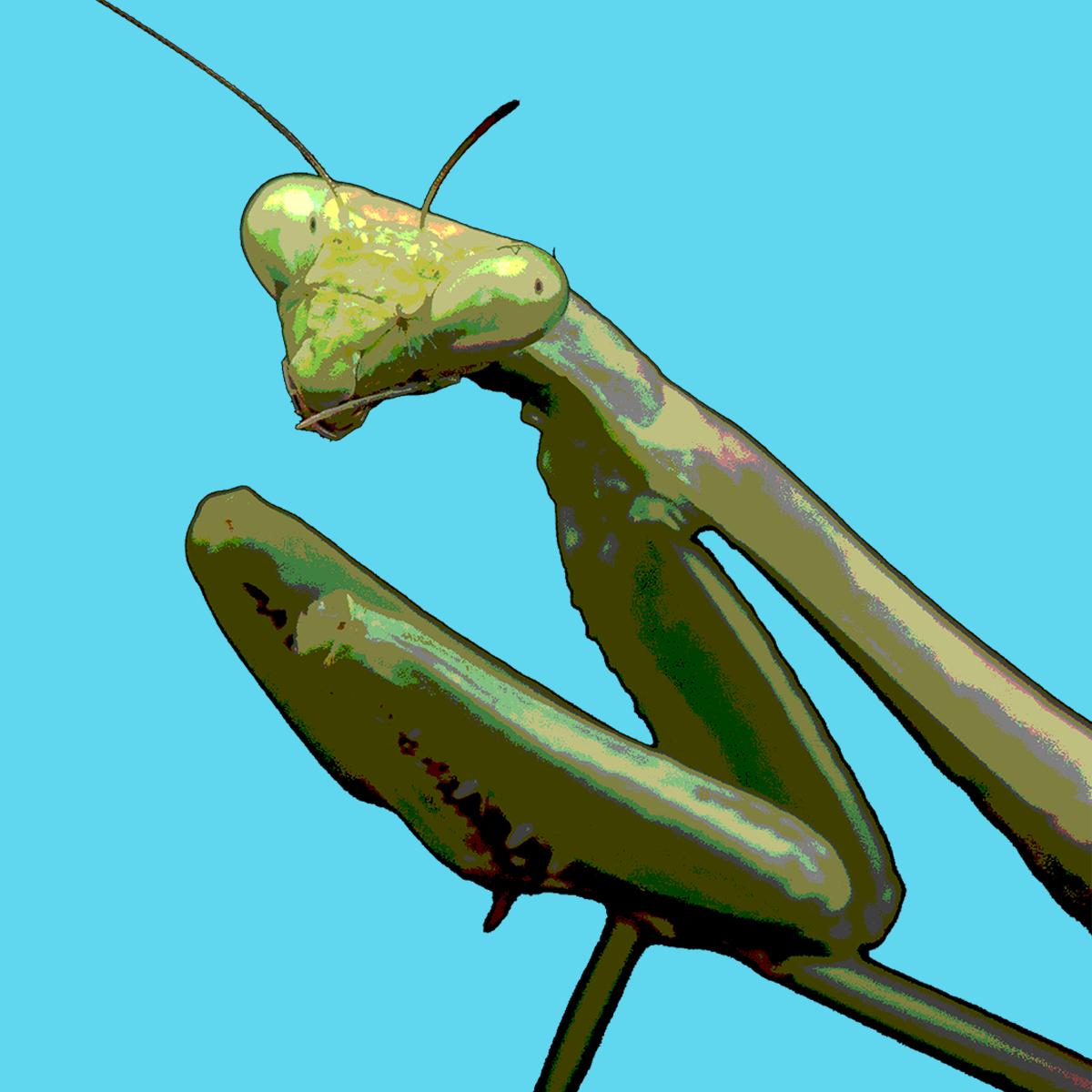 praying-mantis_2.png