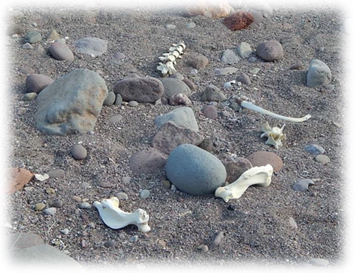 bones on the sand