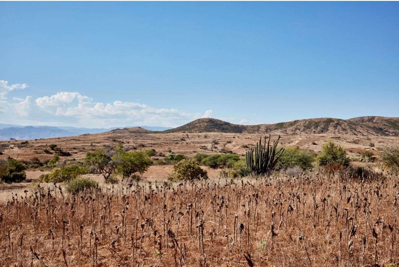 Minas landscape LR GH.jpg