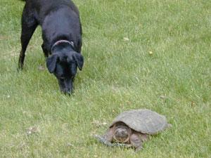 emily-meets-turtle.jpg