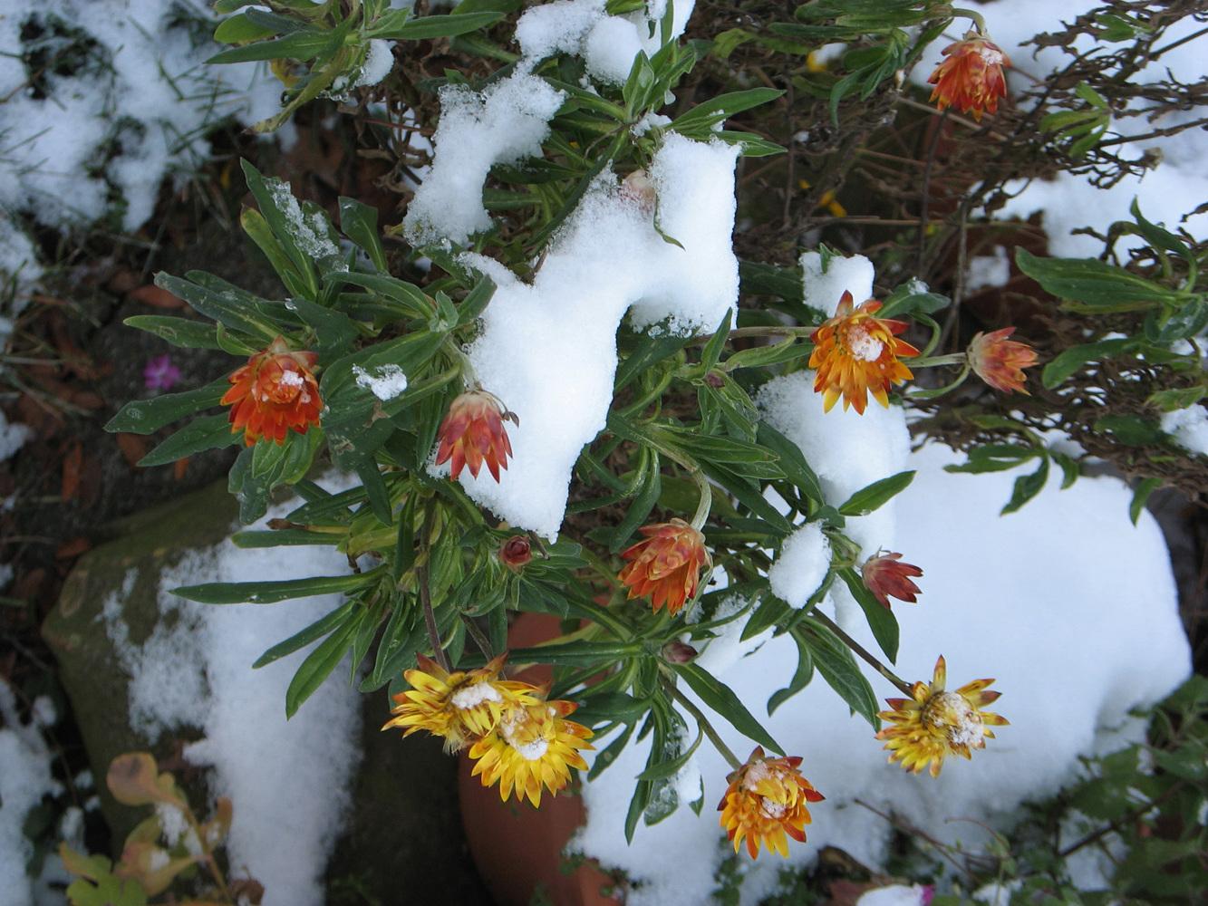 winterflower.jpg