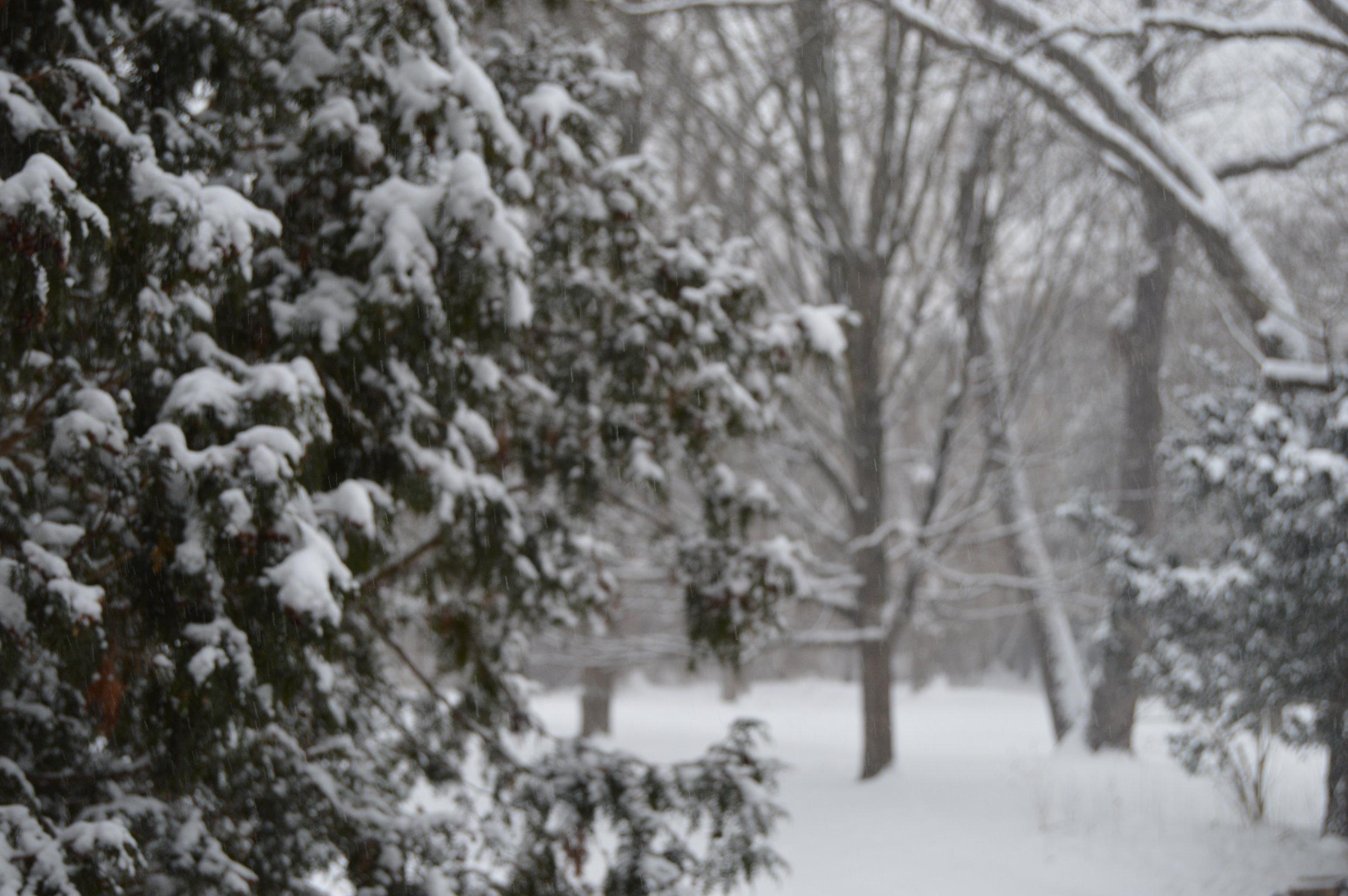 snow5 (1).JPG