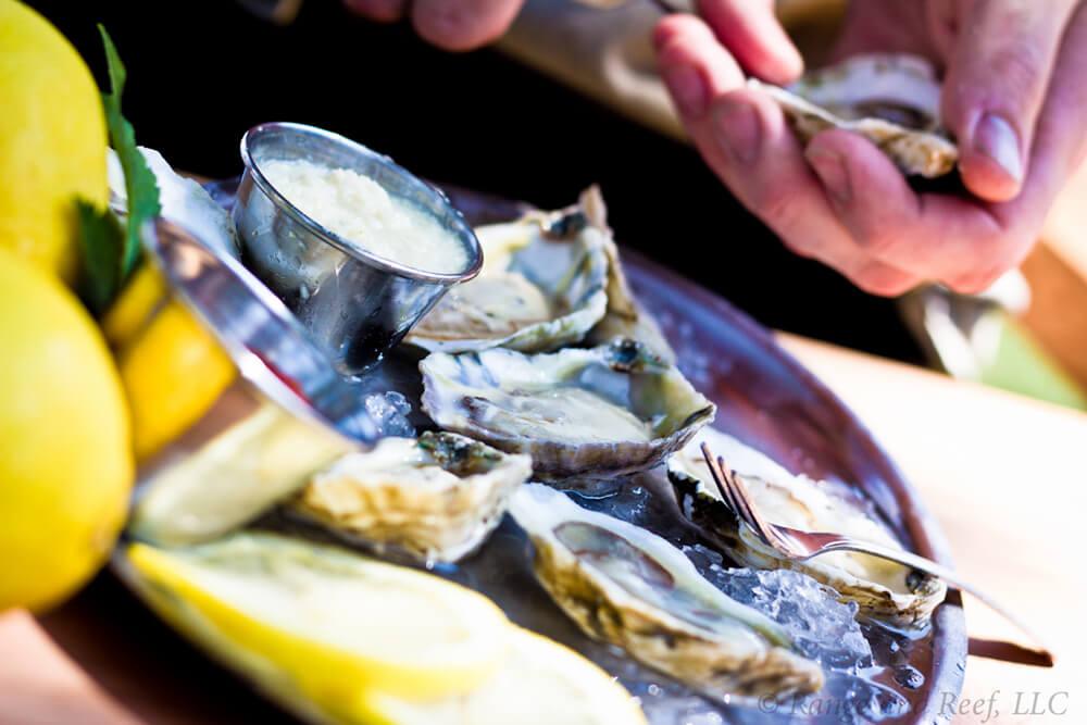 oysters 1.jpg