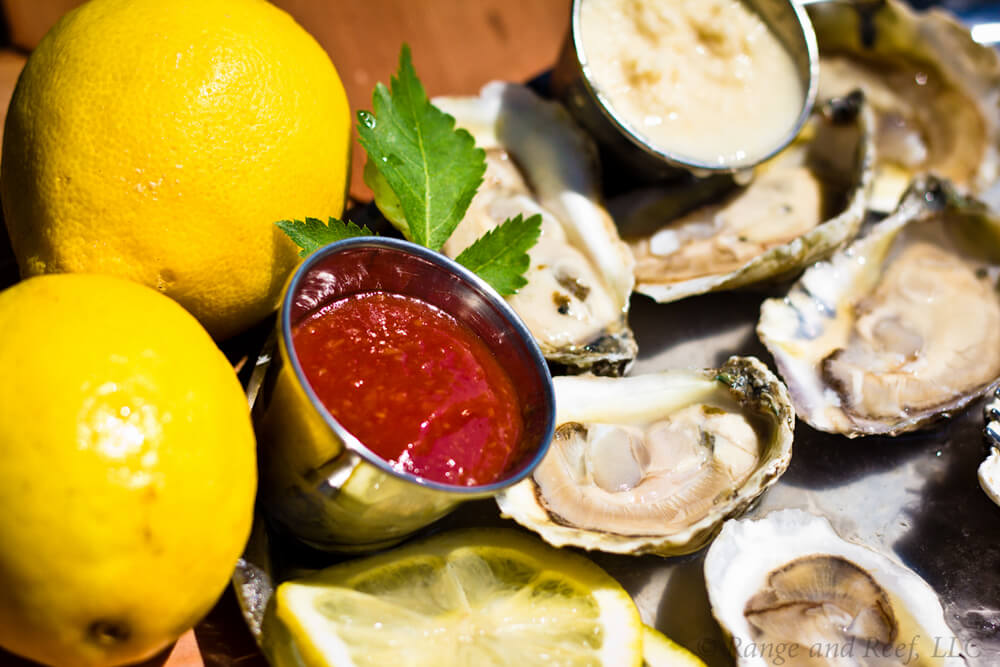 oysters 2.jpg