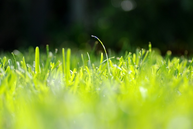 grass-eye-level-c2a9-brett-banta-dreamstime-640x428.jpg