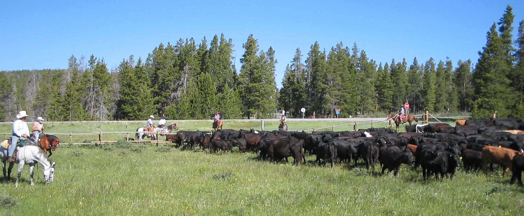 Wyoming 004.jpg