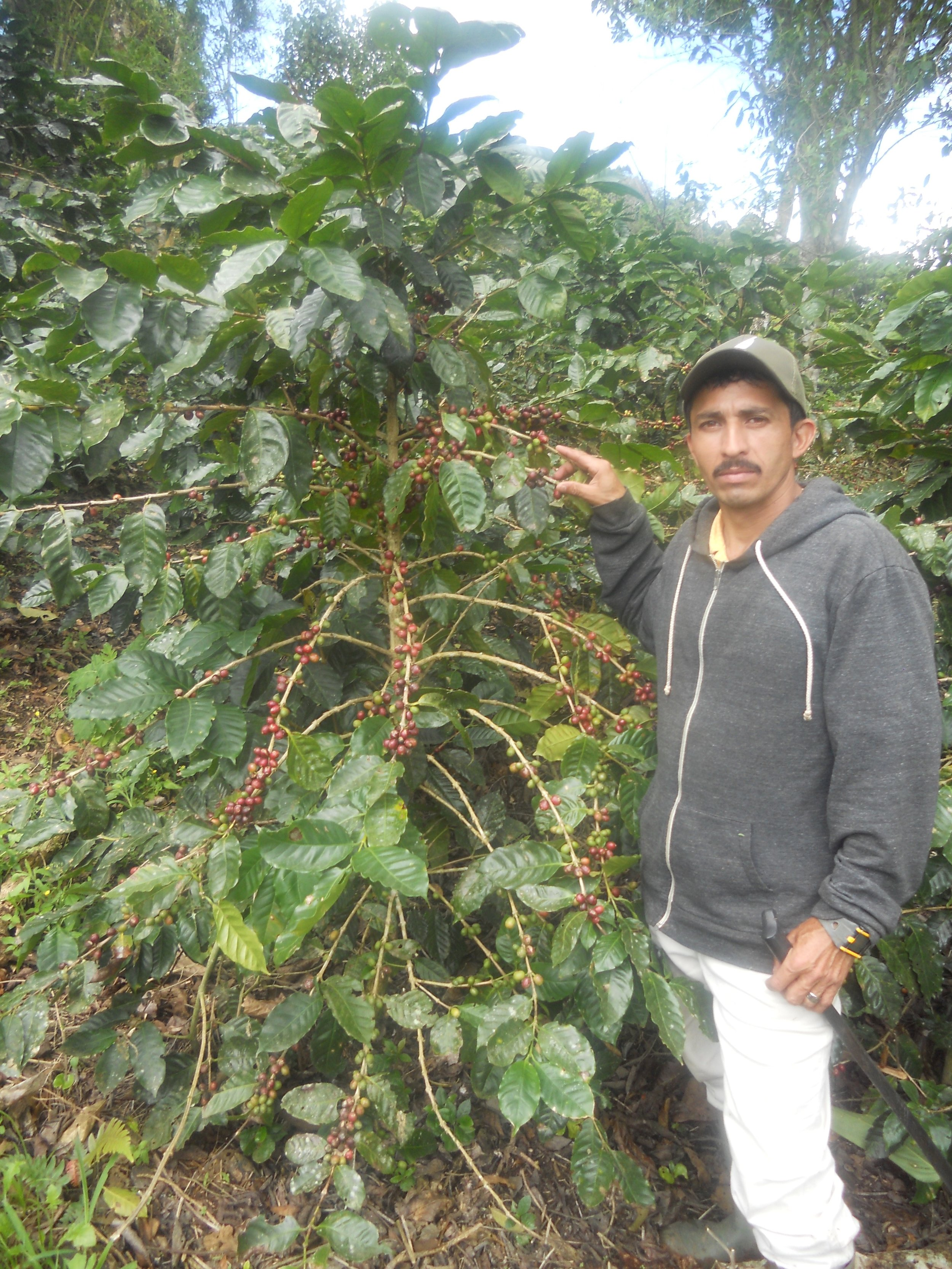 FARM MANAGER DINIS, NEXT TO A PRODUCTIVE 5 YEAR OLD COFFEE PLANT