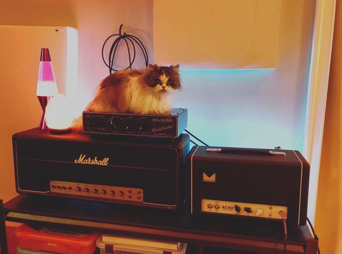 Cats on Amps.jpg