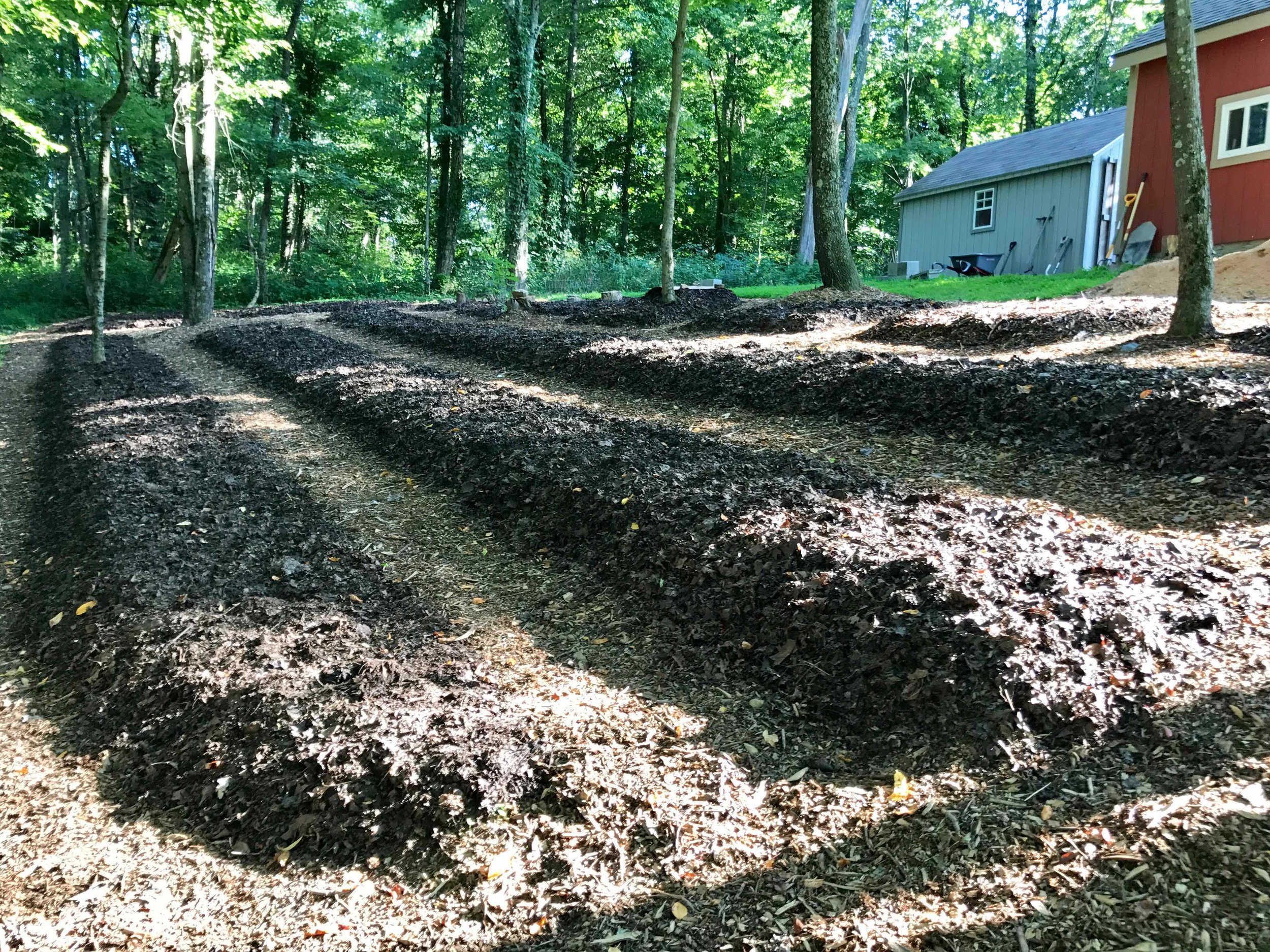 Nursery 10 - more beds mulched.jpg