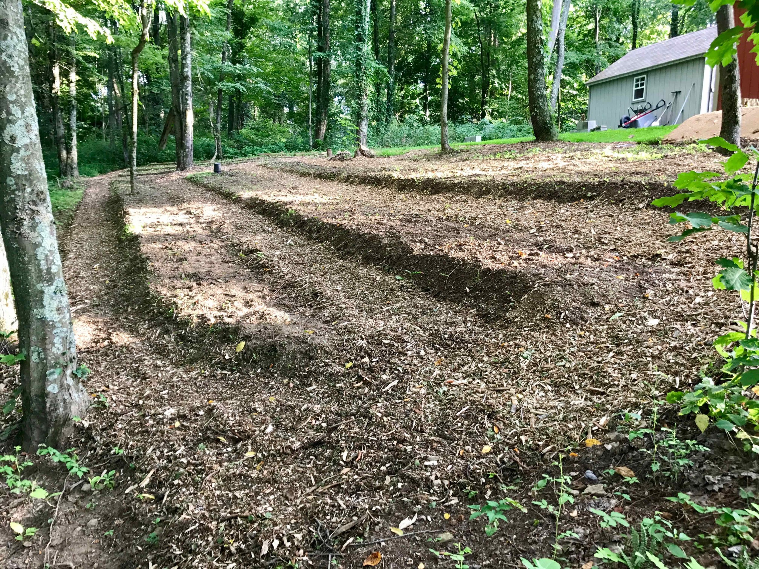 Nursery 6 - paths mulched.jpg