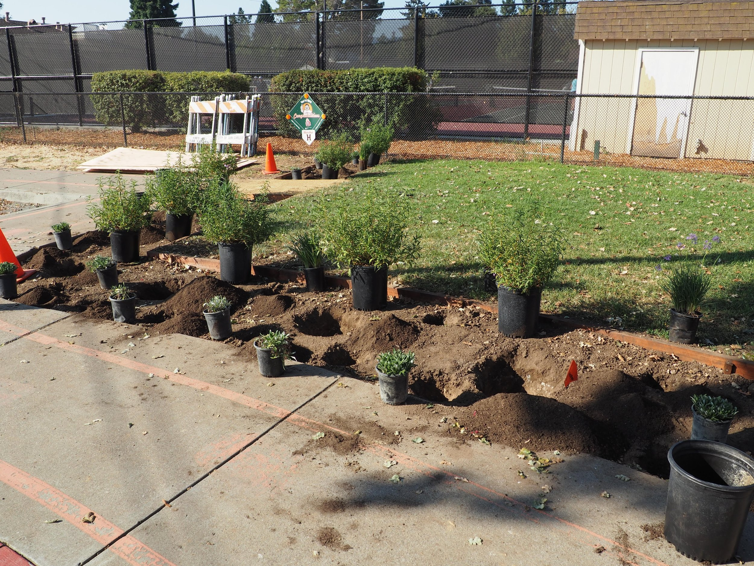 The work to be done at the Burton Park planting project