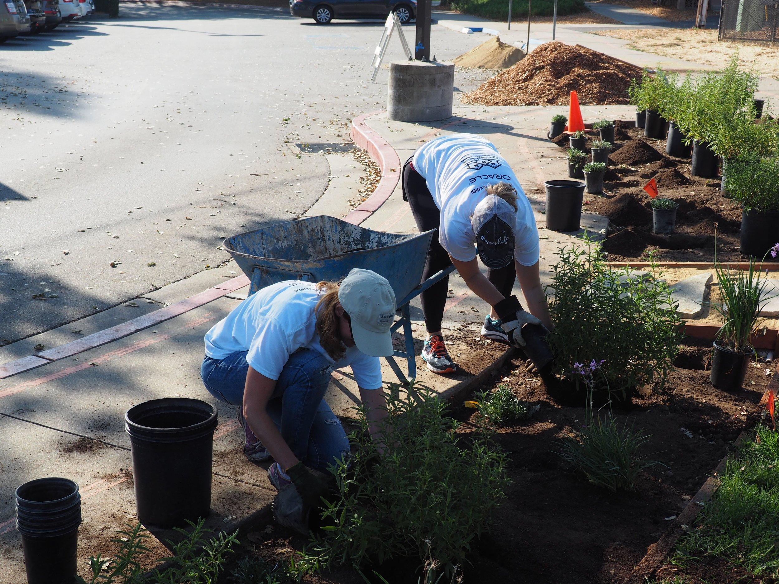 Volunteers planting near the Burton bocce courts