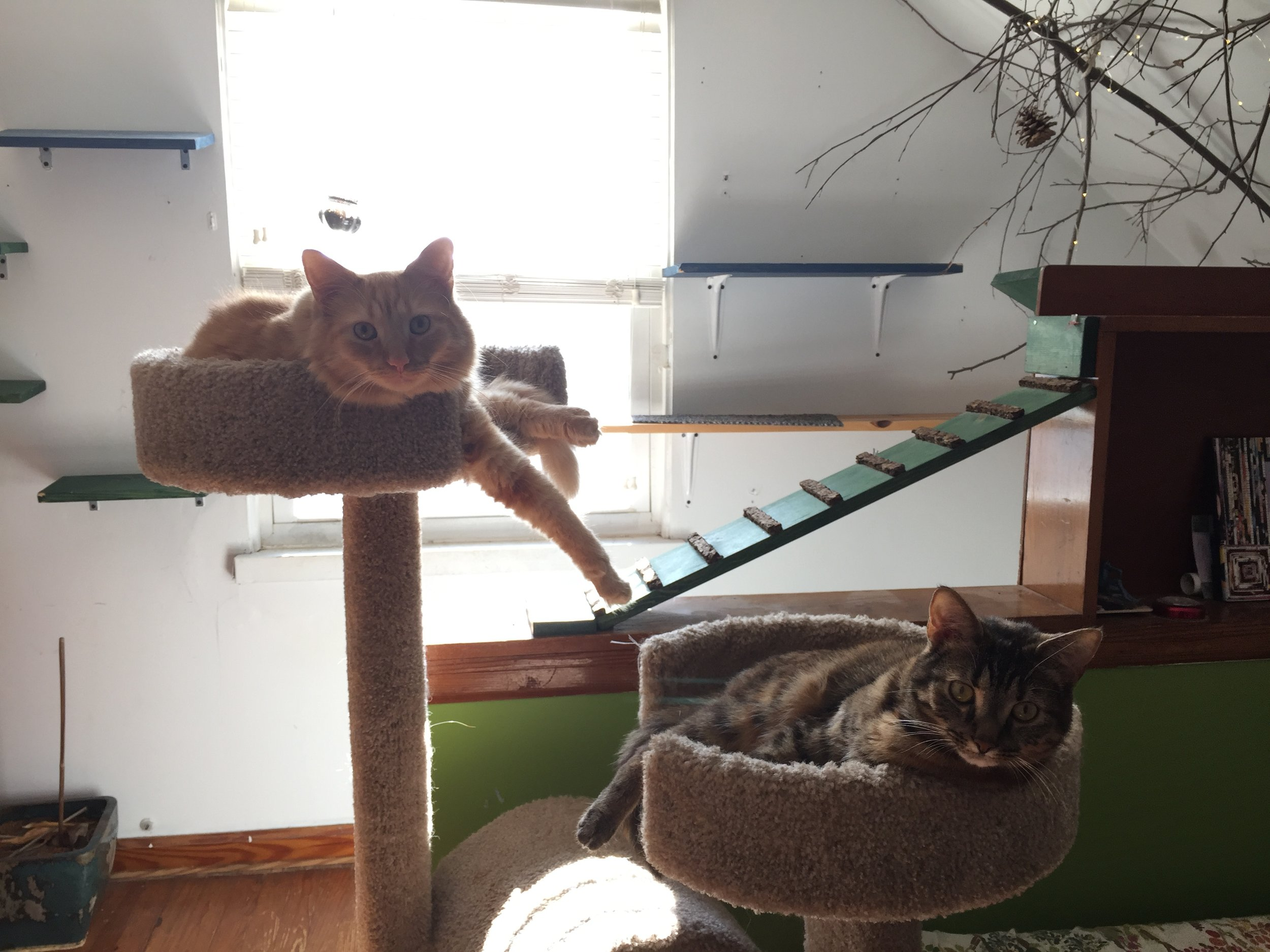 Check out resources on how to provide environmental enrichment for indoor cats!