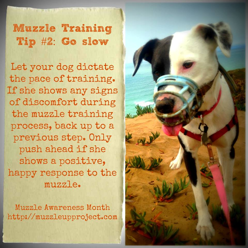Click on the image for Q & A and more muzzle training tips from The Muzzle Up! Project.