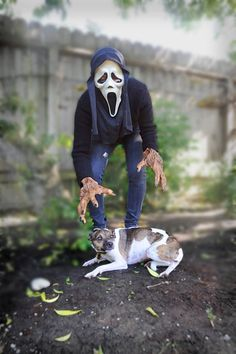 This is how we can appear to our canine friends! Scary right?!