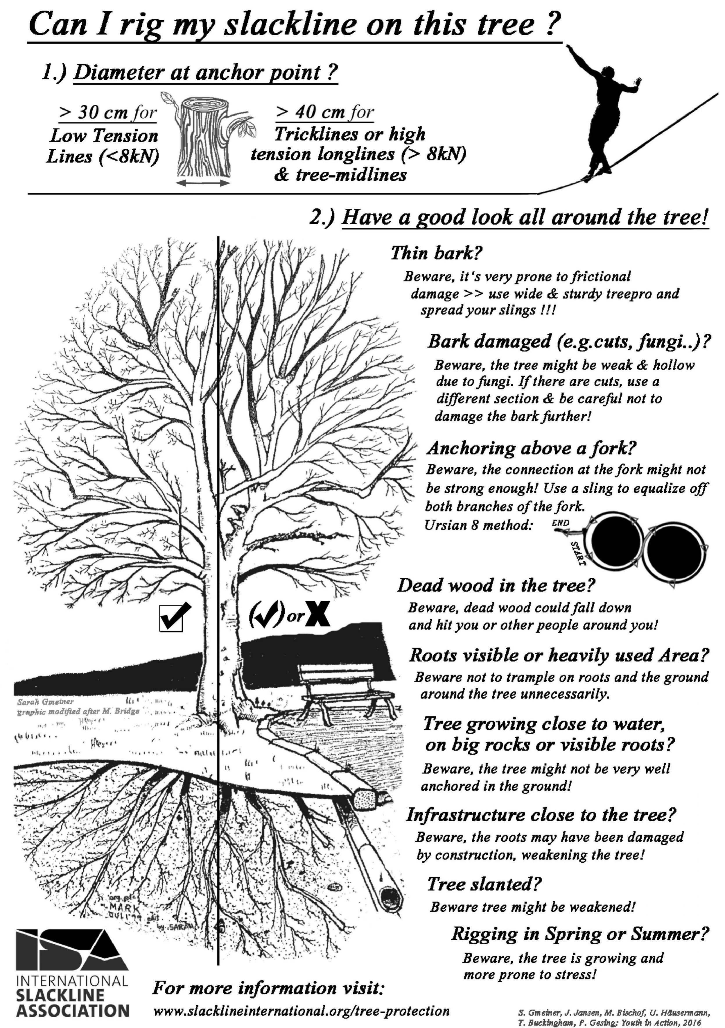 can i rig my slackline on this tree.jpg