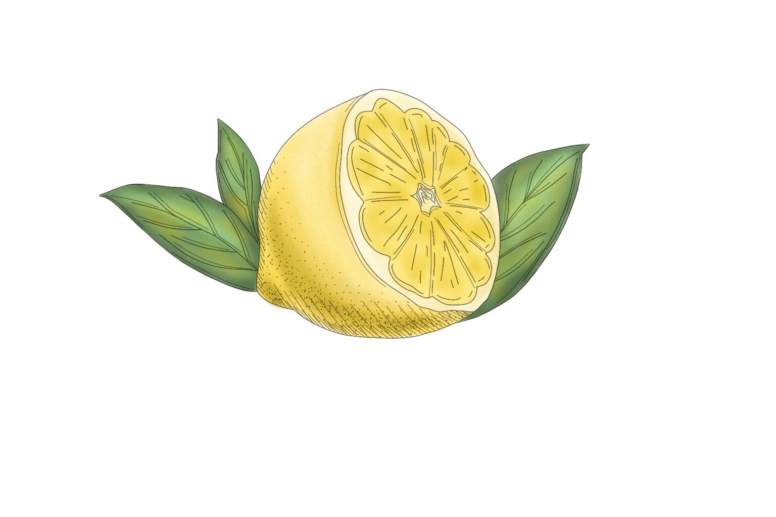 Lemon Oil - A versatile aromatherapy essential oil that has antiseptic and antibacterial properties. Lemon oil acts as an astringent/toner. It contains citric acid that has vitamin B and vitamin C, which helps to brighten skin complexion. Lemon oil provides a natural fresh scent in the Clay Mask.
