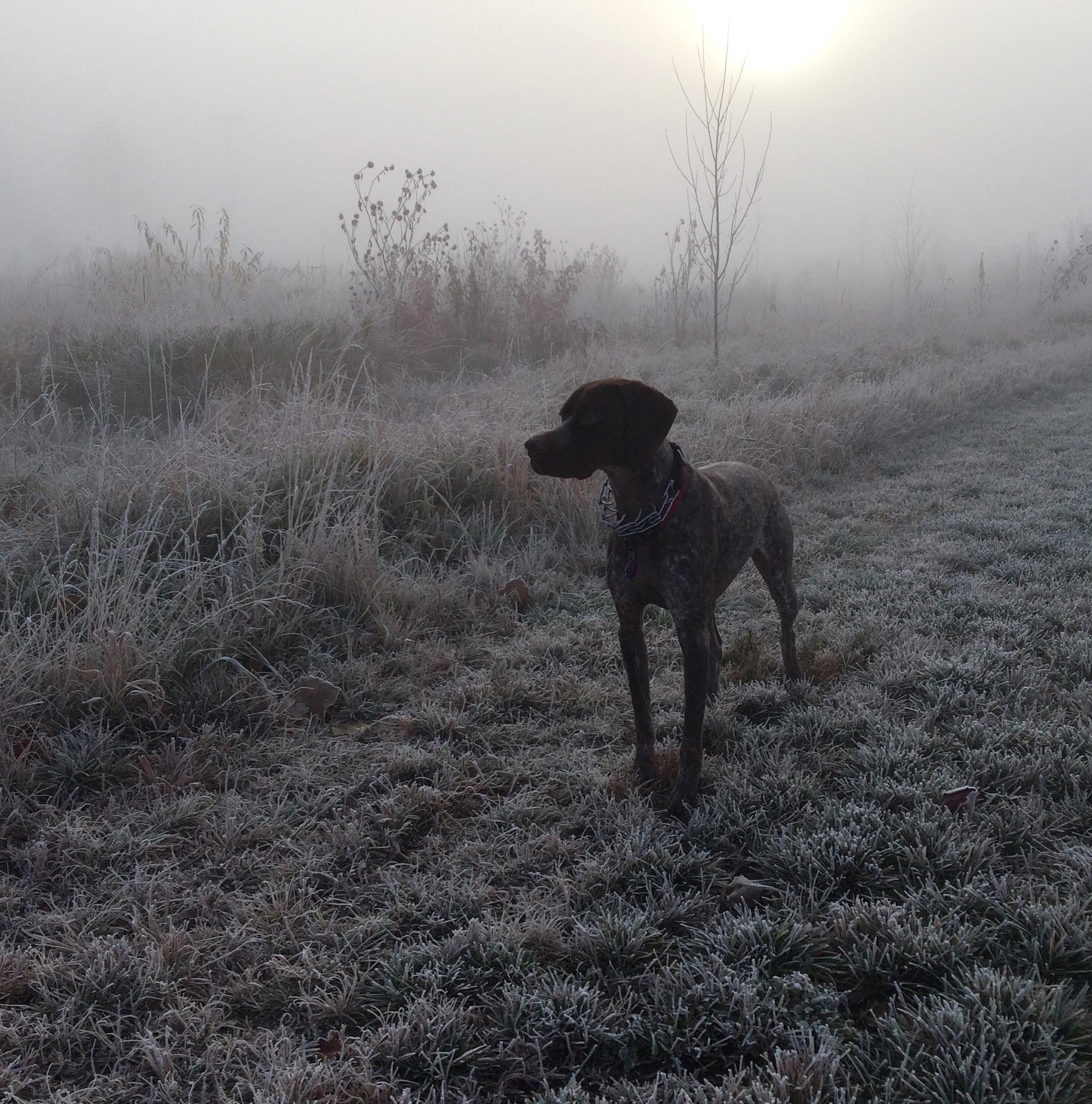 FrostyBraque.jpg