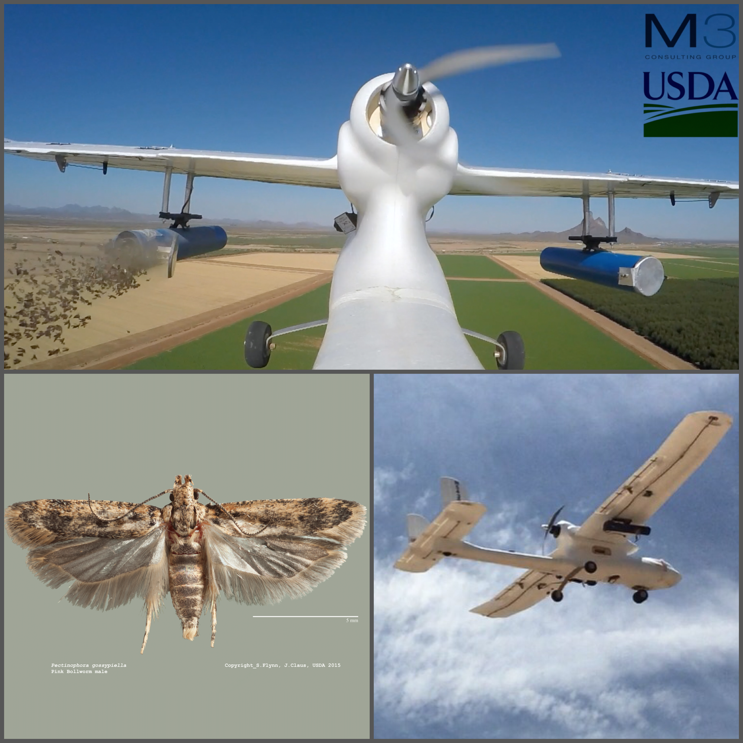 Top: First use of UAS to release Sterile Insects. Lower left: Pink Bollworm. Lower Right: M3 Desert Cardinal UAS