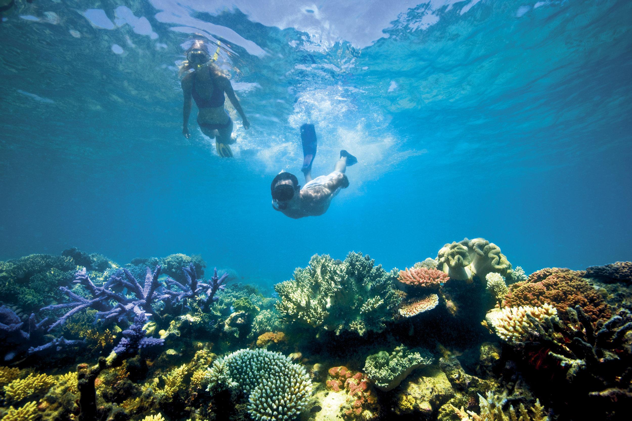 1-Lizard-Island_Great-Barrier-Reef_Snorkelling-575.jpg