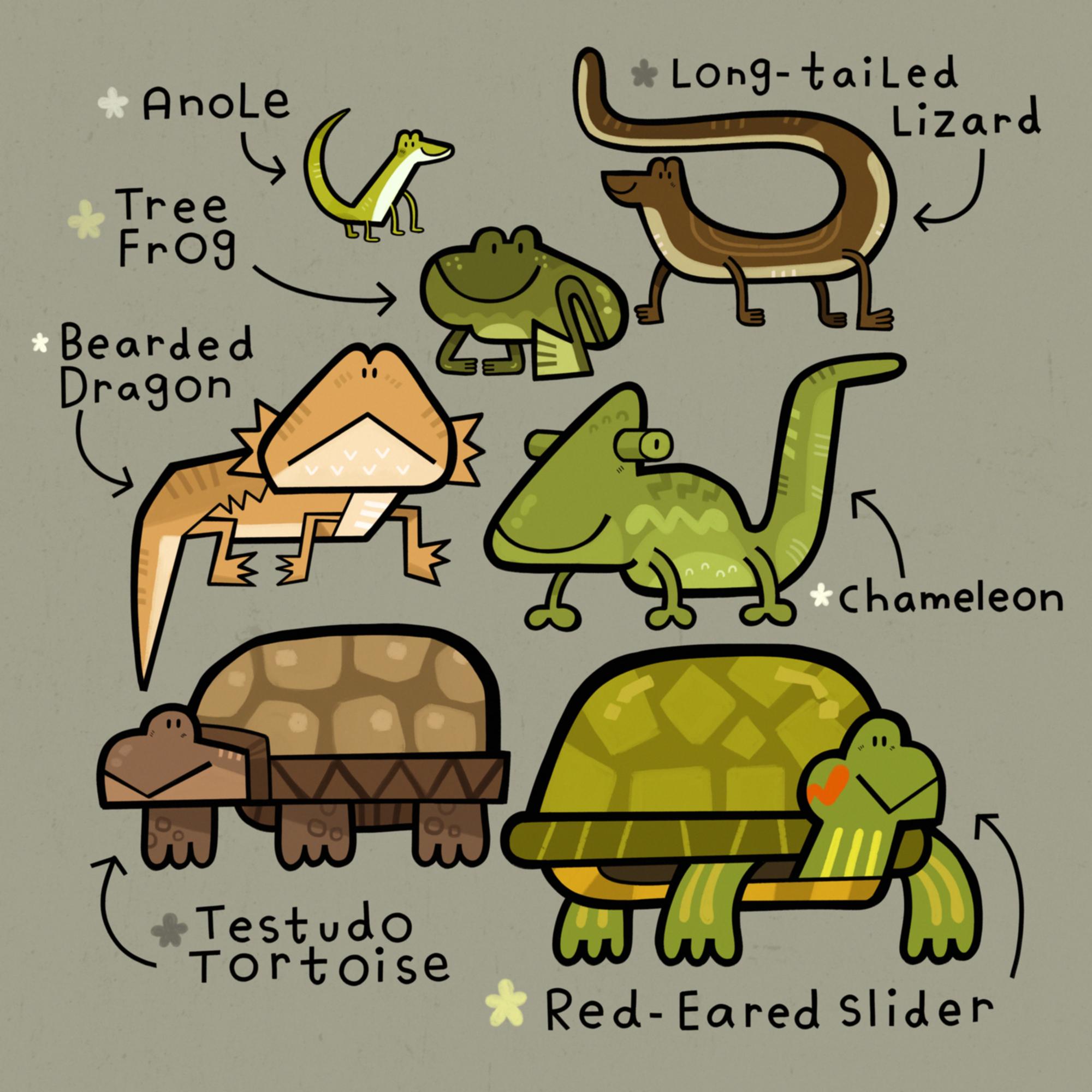 Pet Store Reptiles.