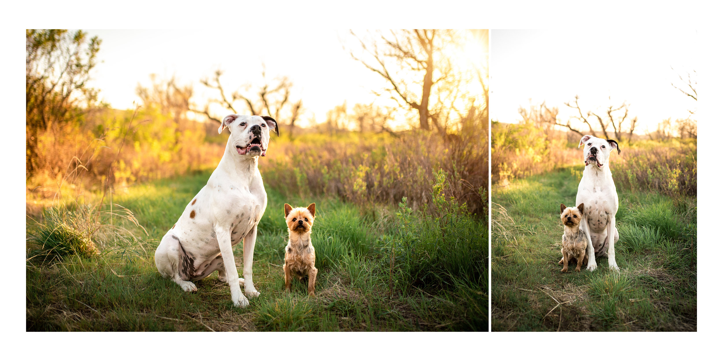 pet photography in Great Falls, MT
