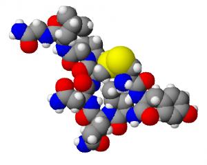 Oxytocin3d-300x240.png
