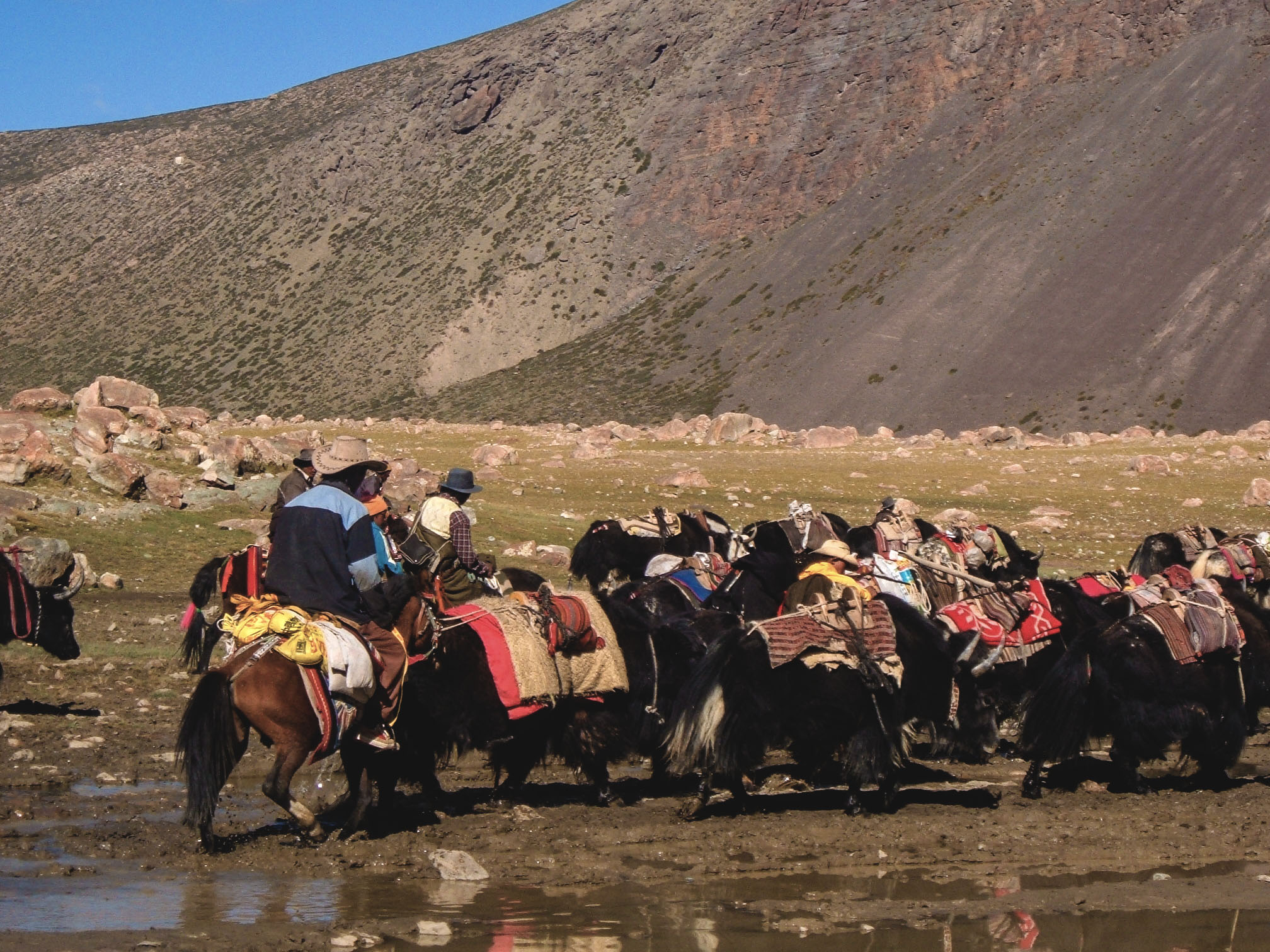 Yaks on the Way to Mt. Kailash