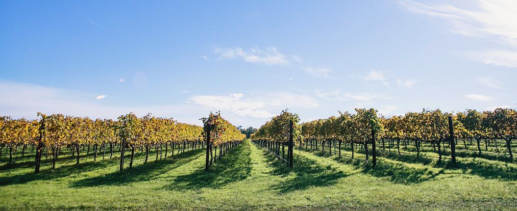 vineyard.png