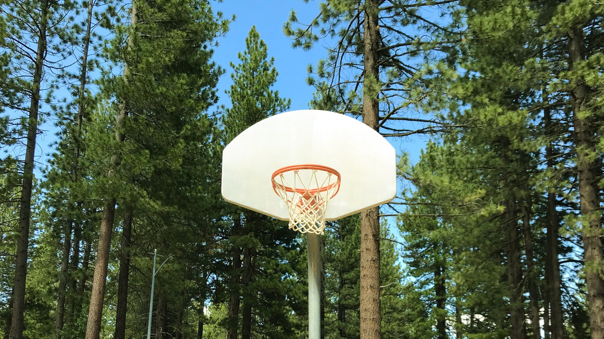 Forest+basketball+court