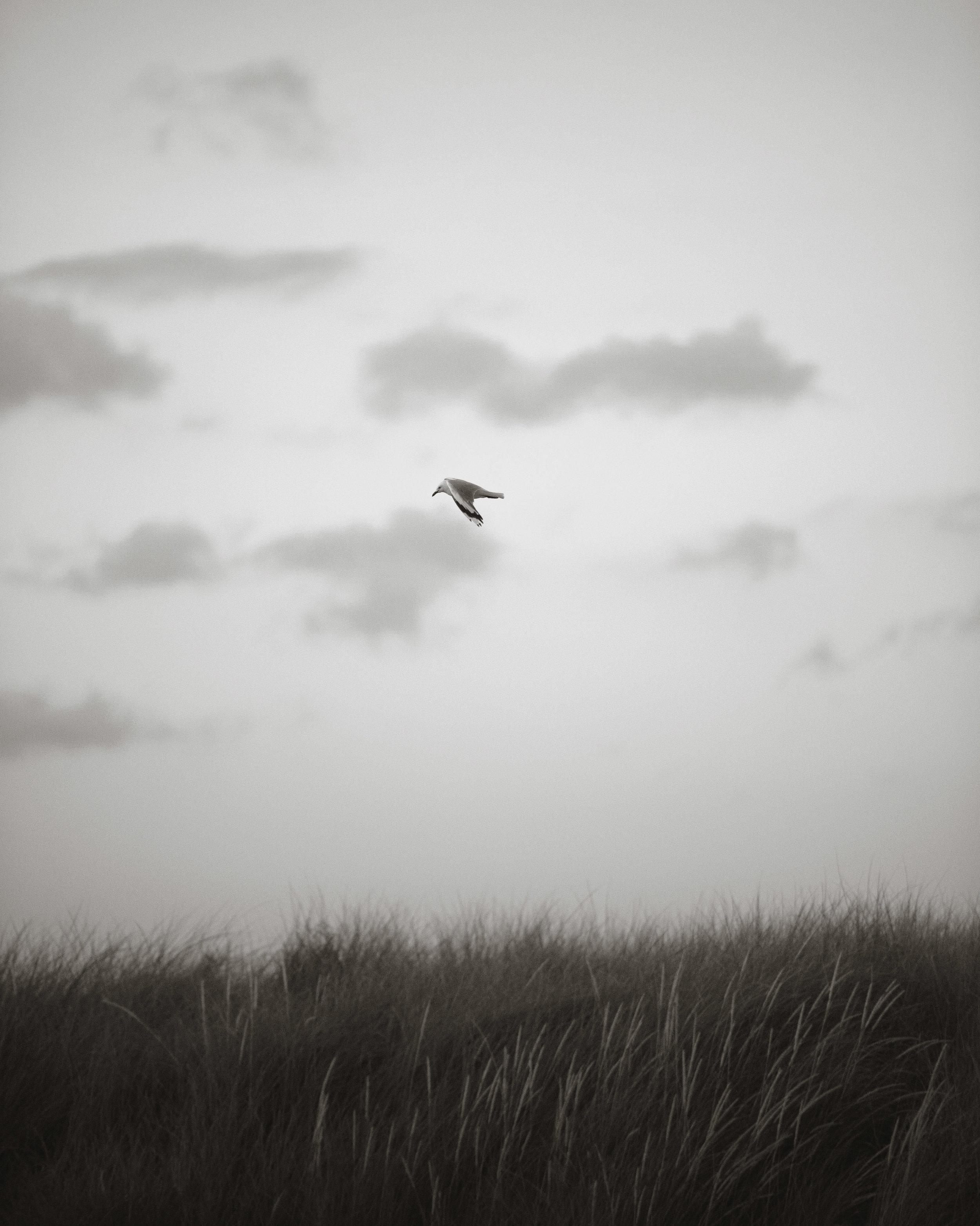 gull-4x5.jpg