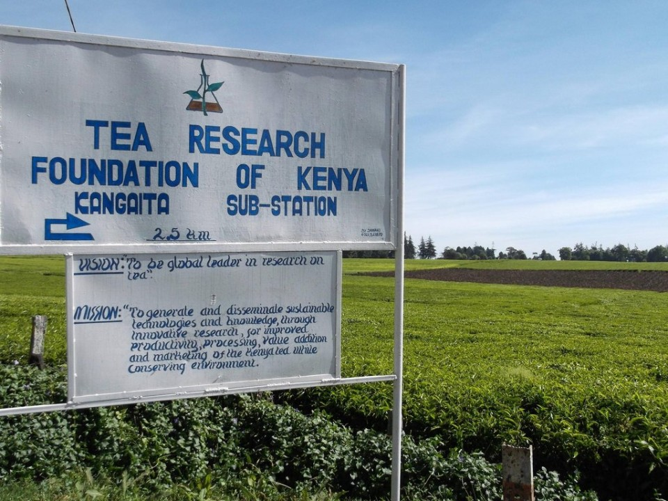Tea Research Kenya