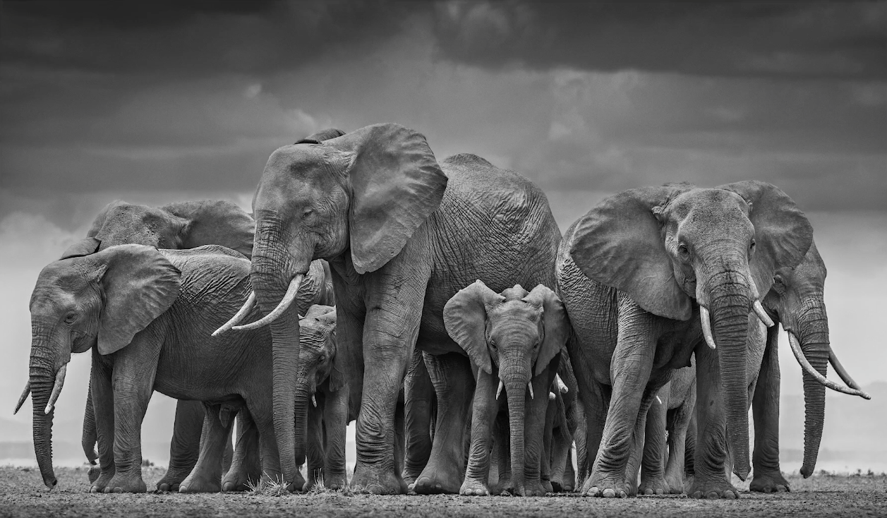 Learn photography wildlife photography with David Yarrow
