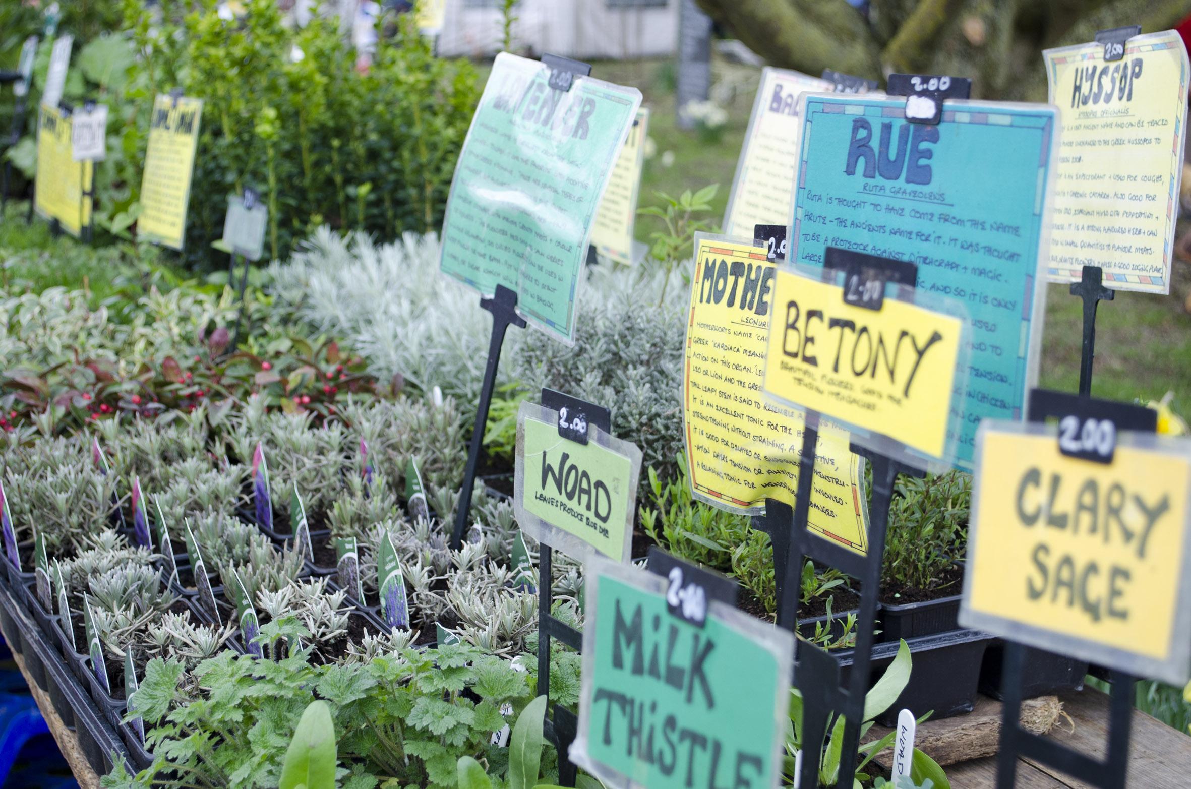 Plant stall-1 20cm.jpg