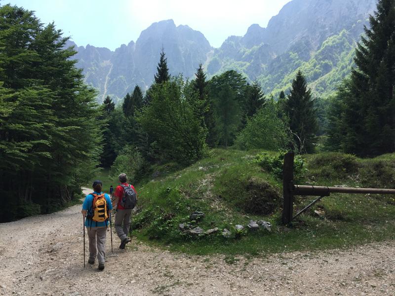 Escursionisti sul Sentiero dei Grandi Alberi.jpg